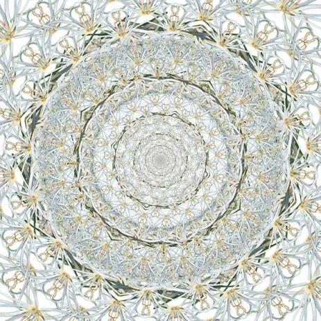 """Regina Nascimento . """"Teia"""", 2013 . série: Bryophyllum . impressão jato de tinta sobre papel . 60 x 60 cm"""