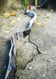 """Simone Cupello . """"Refluxos"""", 2012/13 (série em progresso) . ocupações de rachaduras e fendas com maços de fotografias"""