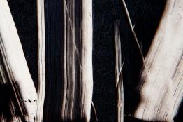 Fernanda Carvalho . Sem título 05, 2013 . série: Transparência . fotografia impressa em papel algodão . 90 x 135 cm
