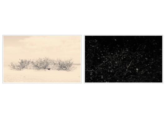 Nathalie Bohm, Silent Woods, 2015, 1-8, fotografia digital, 10x15cm