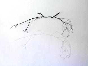 Thais Stoklos Horizonte, 2016. Série: Galhos . Instalação de galho e linha de costura, 85 x 110 x 31 cm